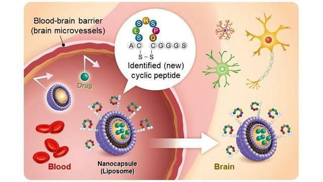 Nanoparticle Drug Delivery Technology Can Cross the Blood-Brain Barrier