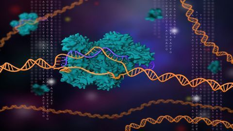 CRISPR/Cas9 Identifies New Protein in the Pathway That Leads to Alzheimer's