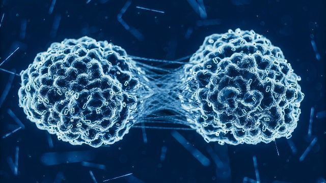 Cellular Mechanism Discovered That Protects Against Cancer