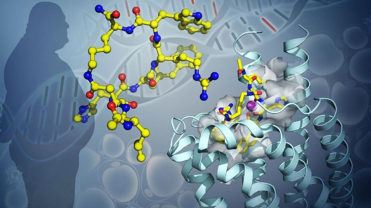 Configuration of Key Protein Involved in Obesity May Lead to Better Treatments