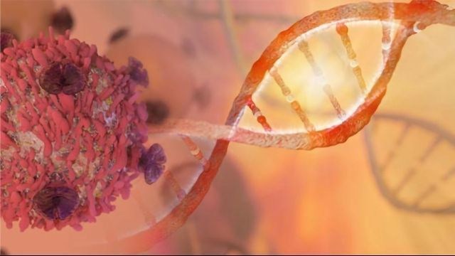 Talazoparib in Advanced BRCA-mutated Breast Cancer – No Overall Survival Benefit But Improved Quality of Life Study Finds