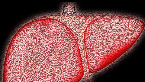 How the Immune System Responds to Hepatitis C Infection