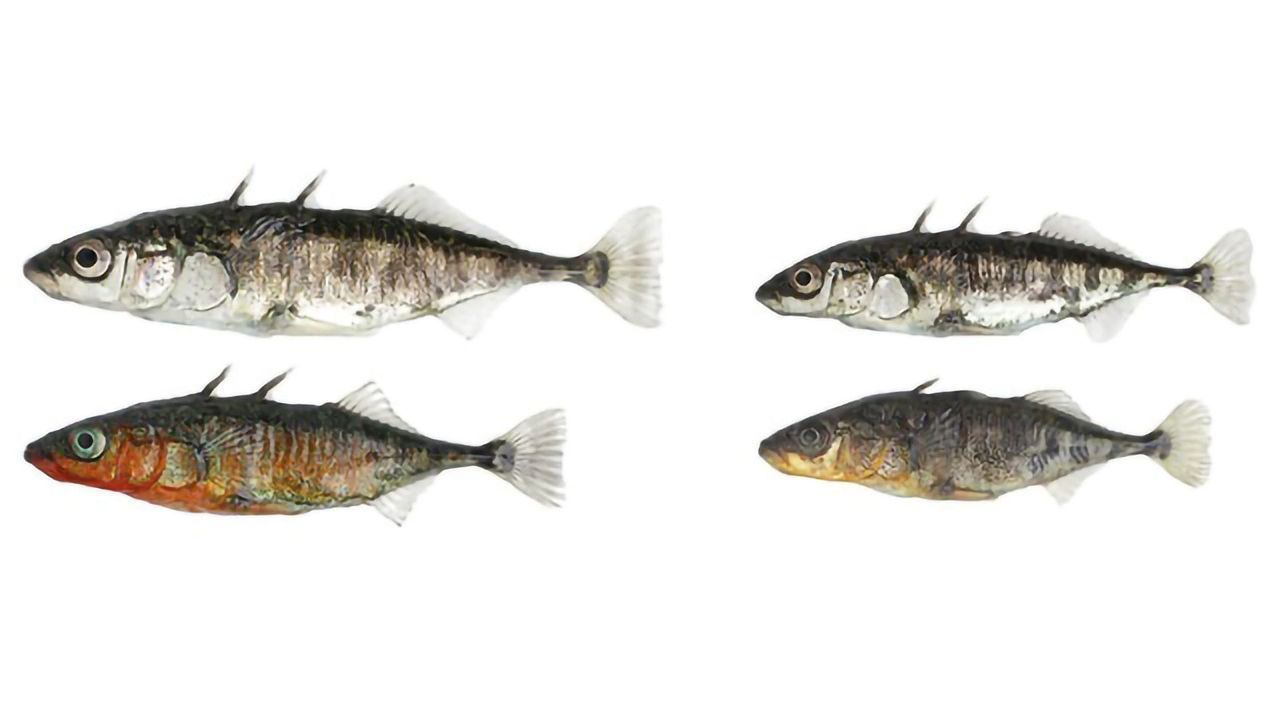 Genomic Changes Within a Generation in Fish