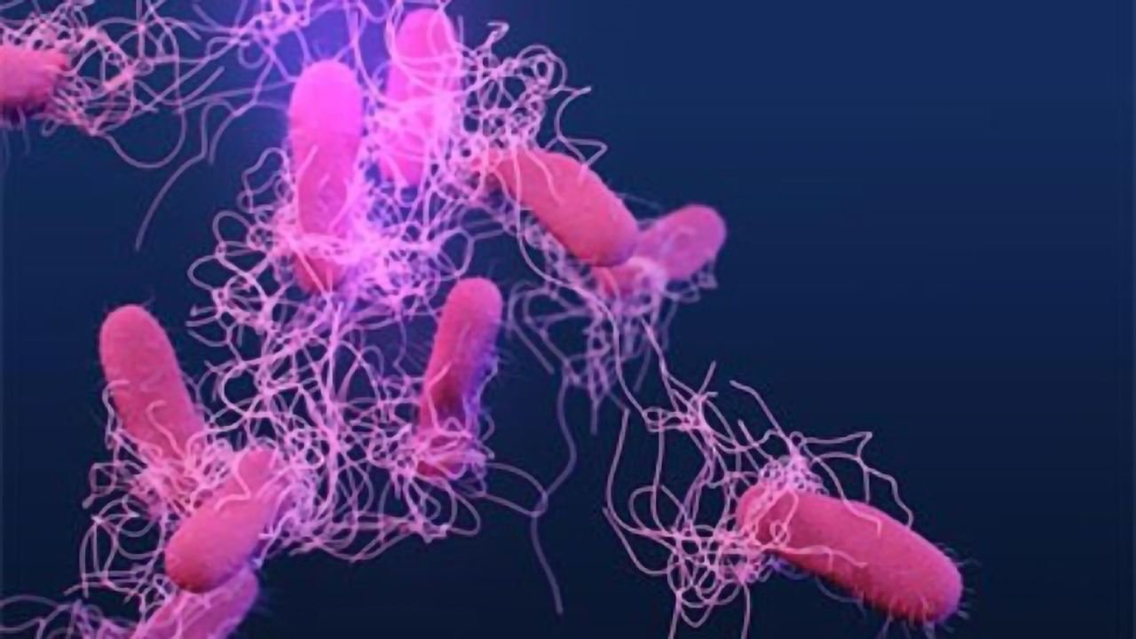 Salmonella Food Poisoning Outbreak Tracking Could Be Improved With DNA Test