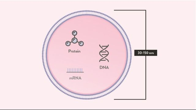 Exosomes: Definition, Function and Use in Therapy