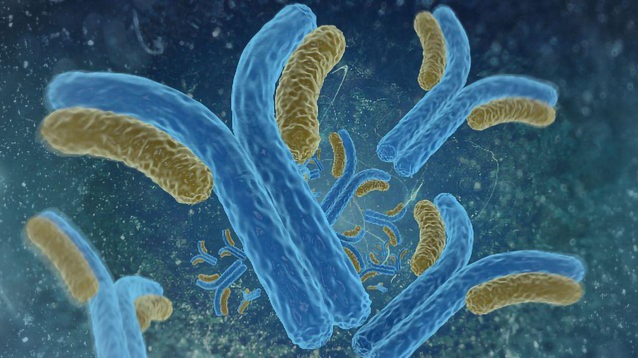 ProteoGenix Announces a New Human COVID-19 Antibody Library