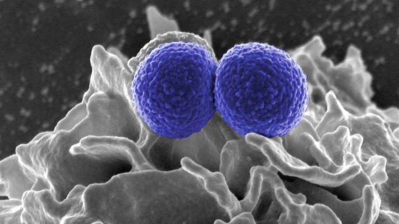 First High-resolution Images of Bacterial Cell Wall