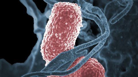 Singularly Resistant Bacteria Primed To Be Resistant to Multiple Antibiotics