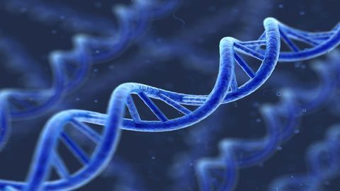 DNA Mutations Result From DNA Damage and Inaccurate DNA Repair Mechanisms