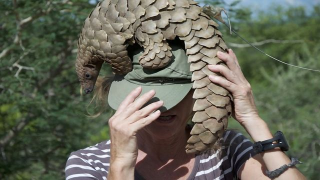 Genetic Study Suggests Pangolins May Possess an Evolutionary Advantage Against Coronaviruses