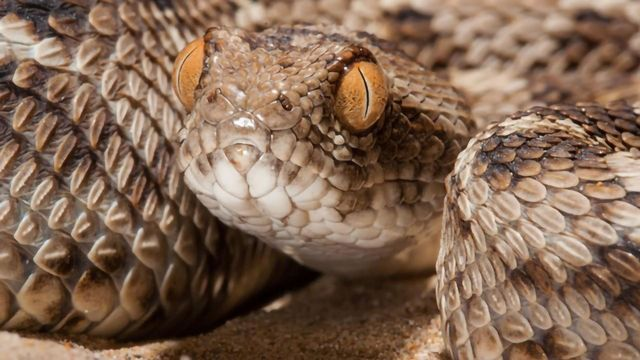 A New Way To Treat a Snakebite?
