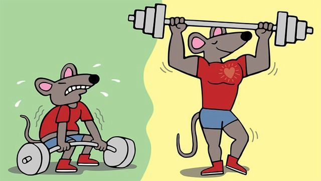 Gene Therapy Builds Muscle in Mice Without Additional Exercise