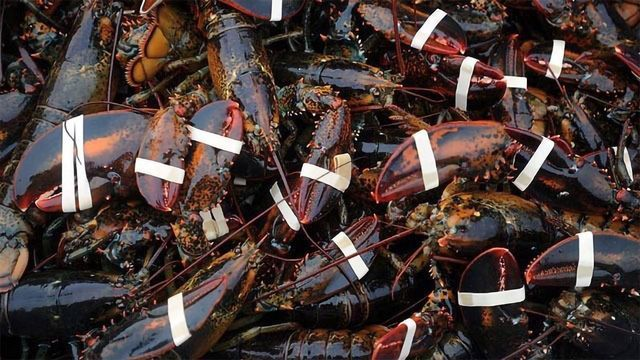 Seafood Traceability Captures Lobsters Crossing the Pond