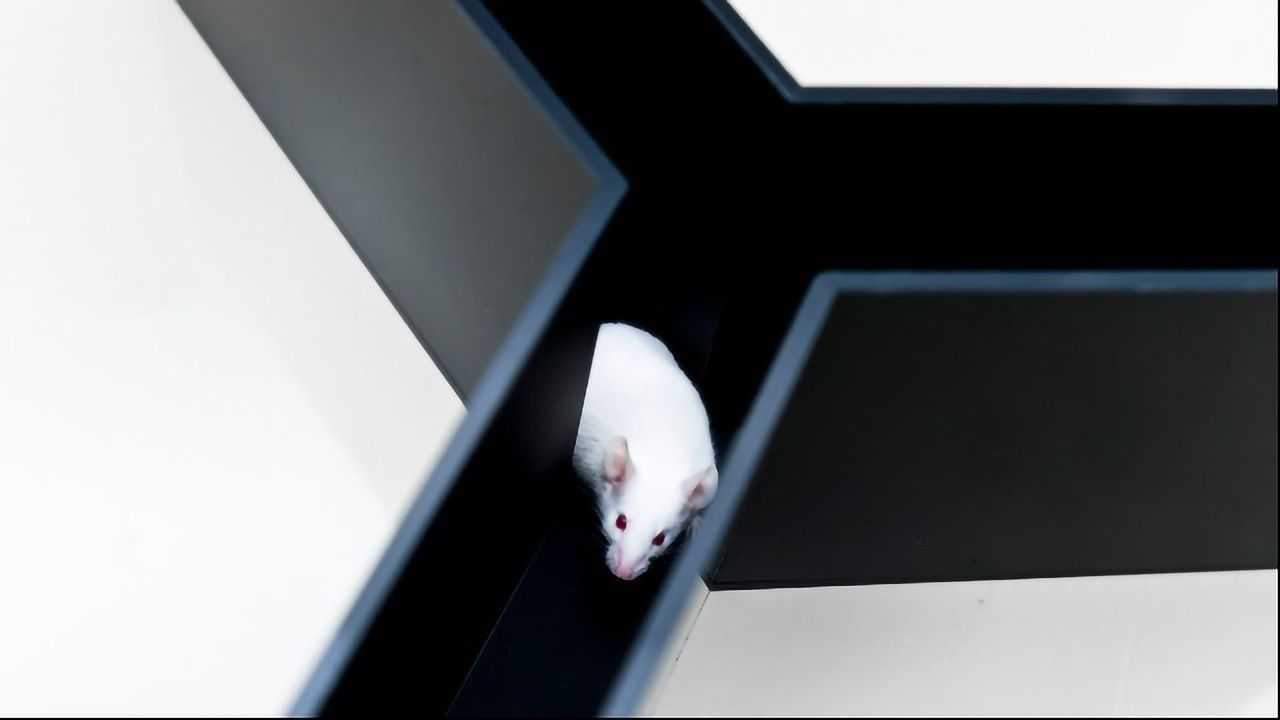 The Similarities and Differences Between Mouse and Human Eyes