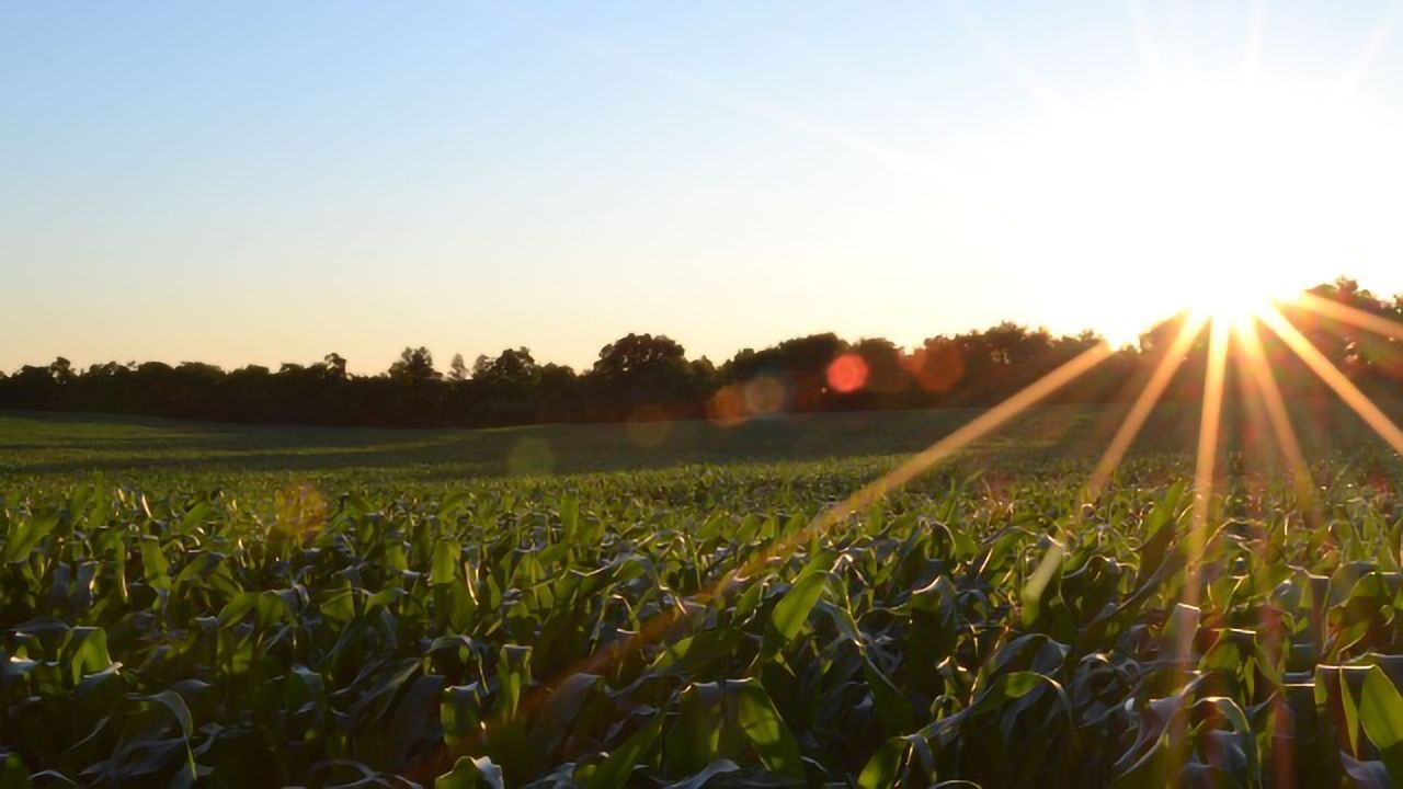 Crop Modeling Points The Way to a Climate Change-proof Future for Agriculture