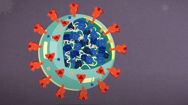 Coronavirus Anatomy Explained: Science, Simplified