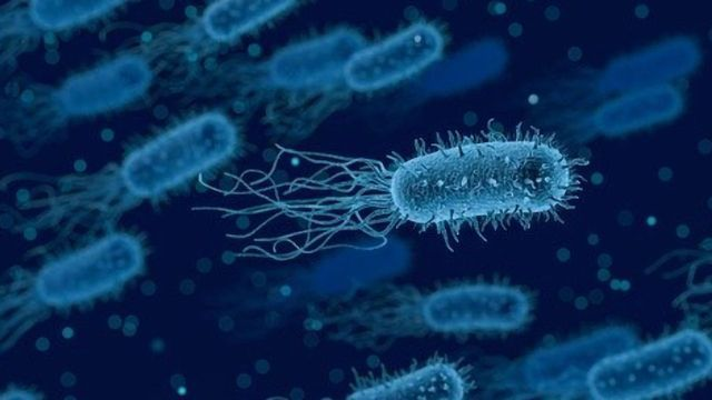 New Intermediate Discovered in Bacterial Cell Wall Synthesis