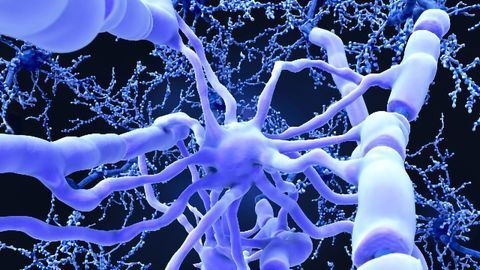 Mature Oligodendrocytes Can Generate New Myelin Sheaths, Finds Paradigm-busting Study