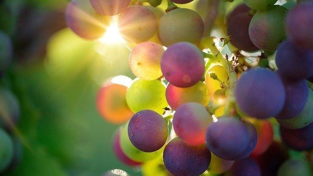 The Wine Chemist - Sulfites