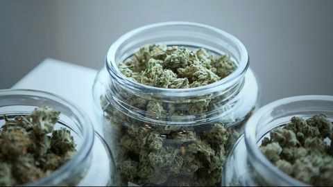 Cannabis Cravings Differ Between the Sexes
