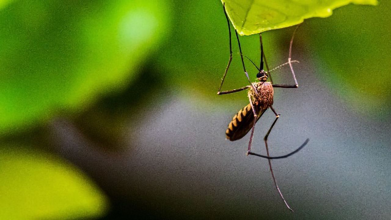 Protocol for Detecting Zika in the Placenta Needs Revising, Study Indicates