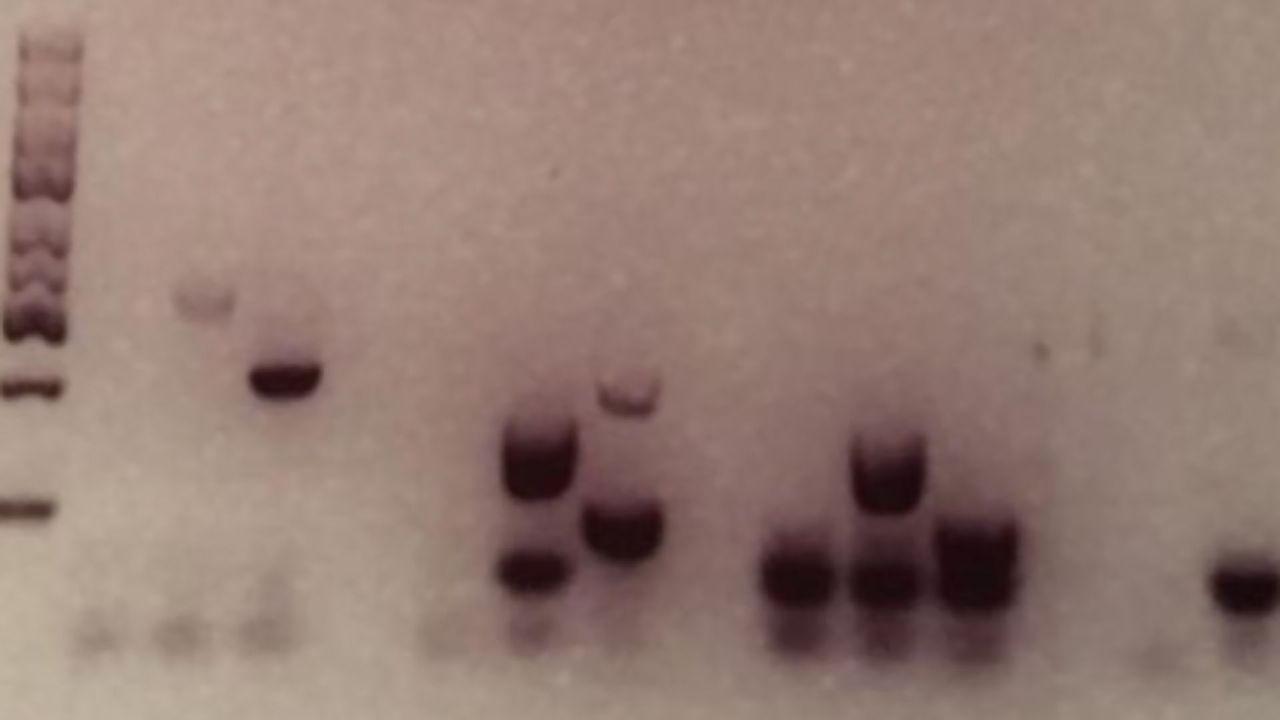 Keeping Forensic DNA Fingerprinting Samples Safe