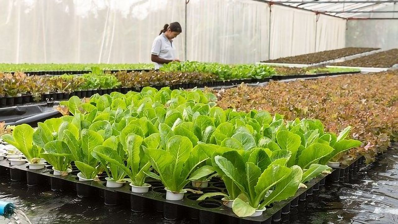 Plant Probiotic Could Reduce Pesticide Use