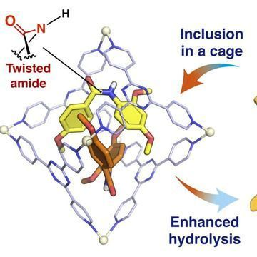A Small Twist in Protein Structure Leads to a Big Reaction