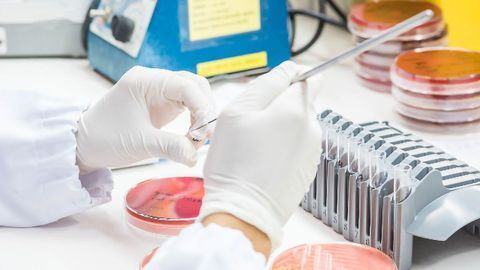 Barrier in Bacterial Engineering Overcome