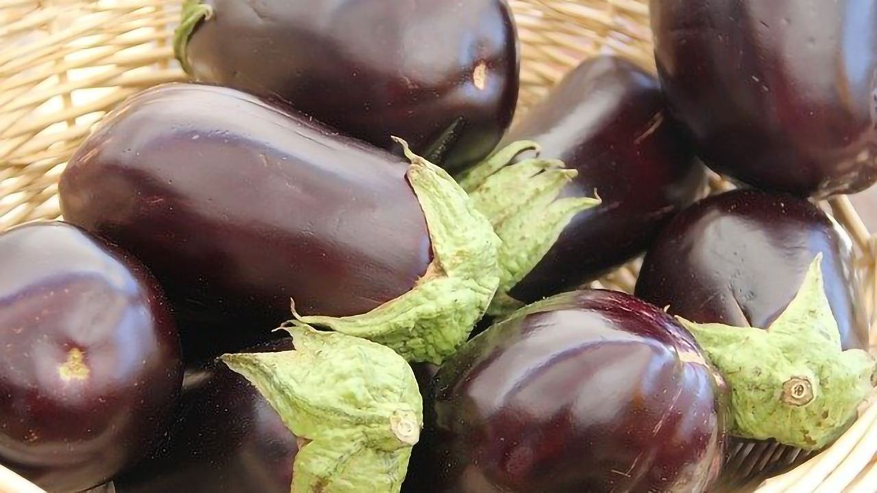 Reaping the Rewards of Engineered Eggplants