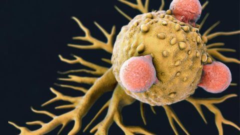 Engineers Design Nanoparticles To Boost Cancer Immunotherapy