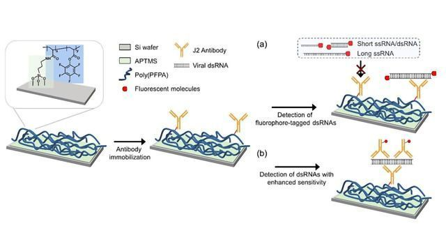Universal Virus Detection Platform To Expedite Viral Diagnosis Developed