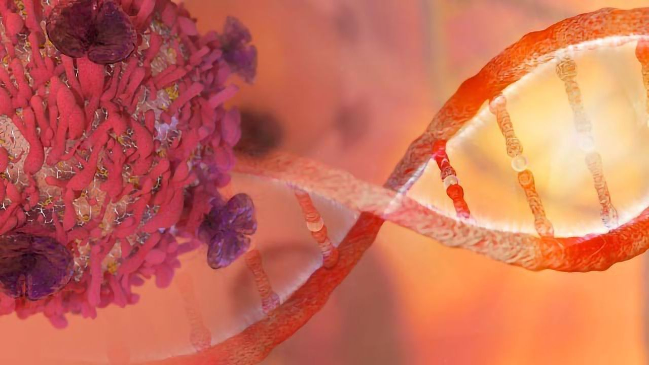TiPARP Protein Terminates Several Cancer-causing Transcription Factors