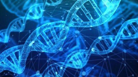 Primitive Genetic Alphabet Based on RNA and DNA