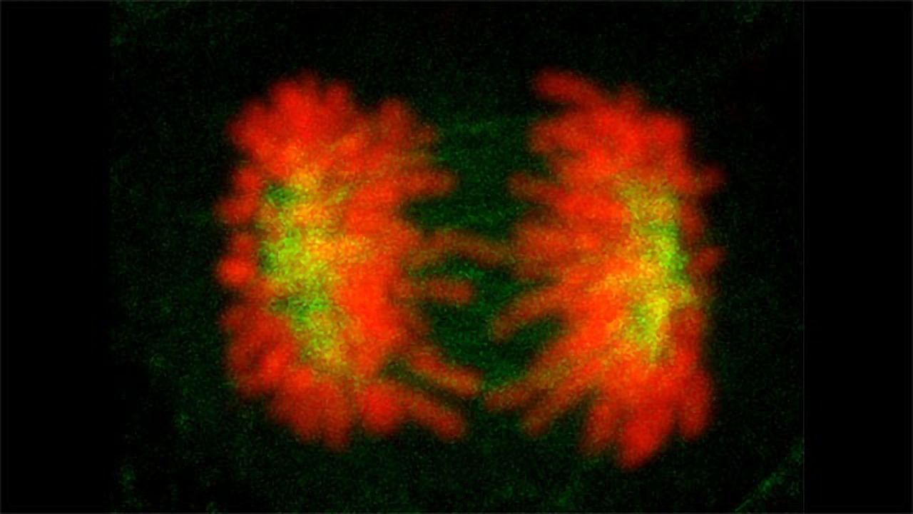 How Cells Solve Their Identity Crisis
