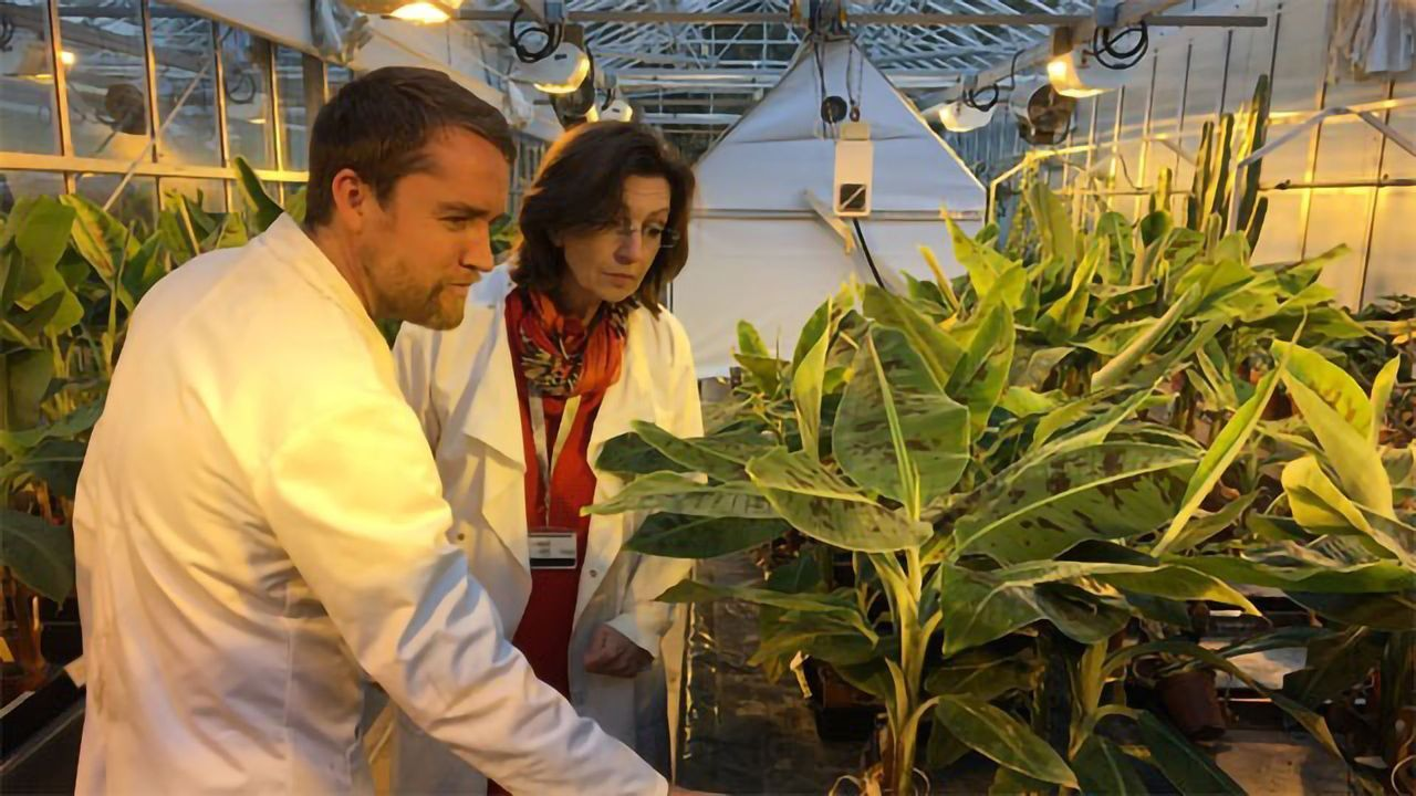 Emerging Fungal Crop Pathogens Are Threat to Food Supply