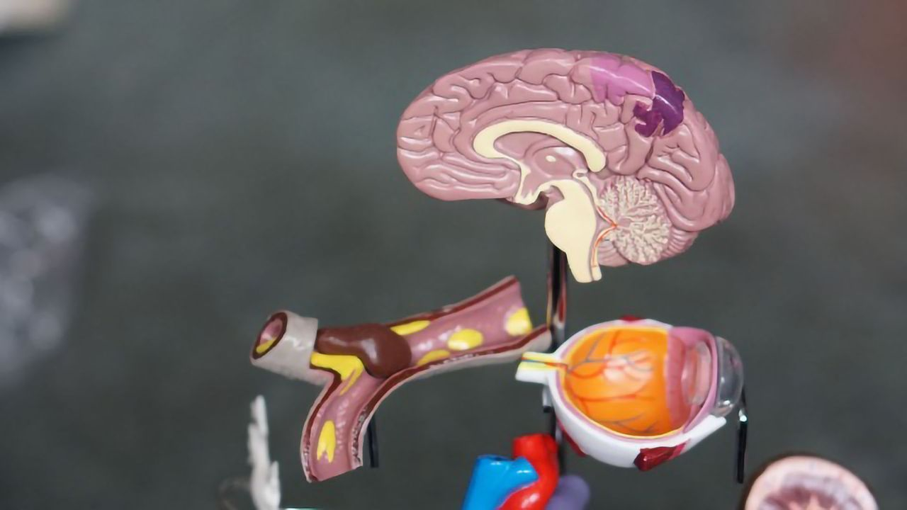 Why COVID-19 Is a Threat to the Entire Nervous System
