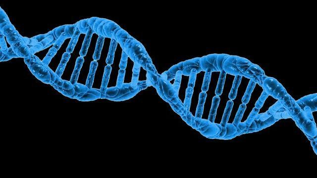 Susceptibility to Carcinogens Differs Due to Genetics