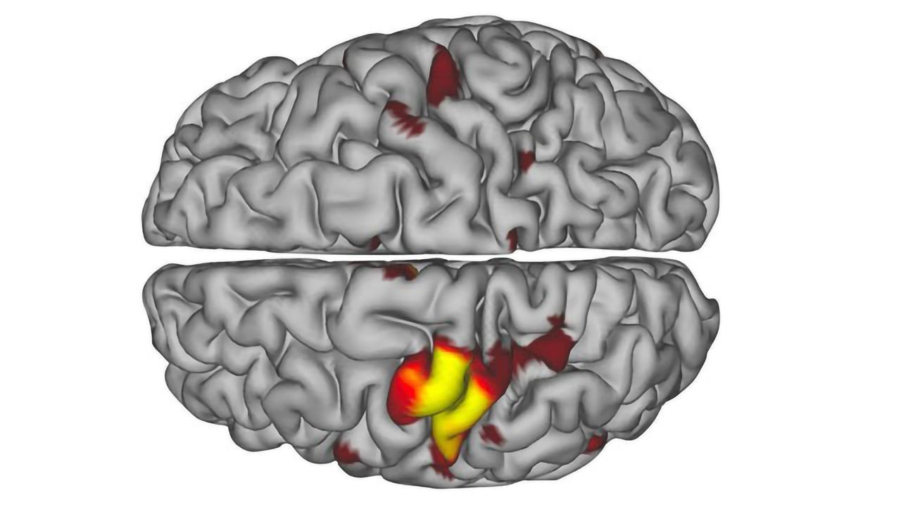Brain Pulses Put Unused Limbs in Neural Standby Mode