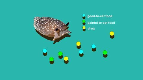 What a Simulated Sea Slug Called ASIMOV Can Teach Us About Addiction