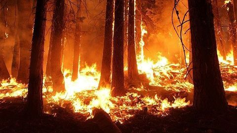 """""""Paper Chips"""" Could Provide Early Warning of Forest Fires"""