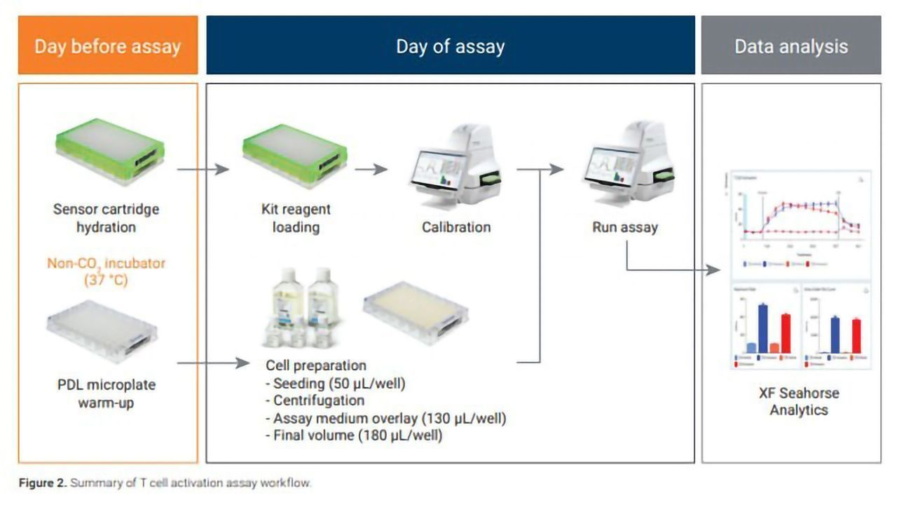 Real-time Detection and Modulation of Human T Cell Activation Using Agilent Seahorse XF Hu T Cell Activation Assay Kit