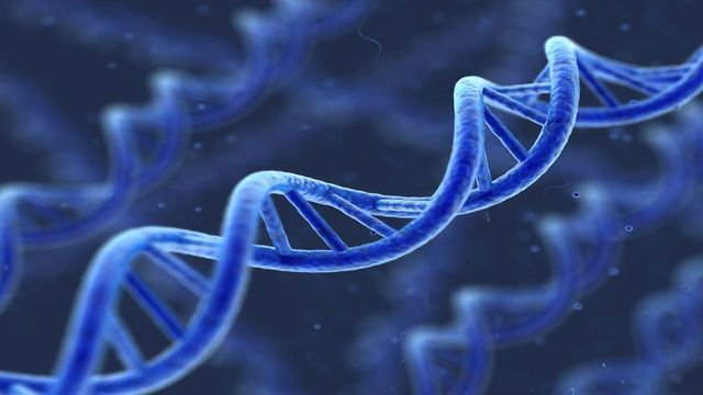 Enigmatic Protein Sculpts DNA To Repair Harmful Damage