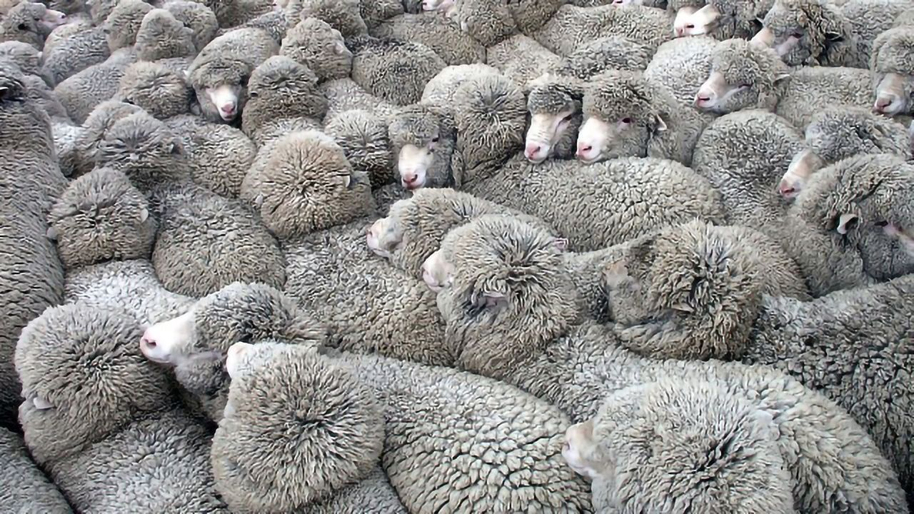 Researchers Use Electric Fields To Herd Cells Like Flocks of Sheep