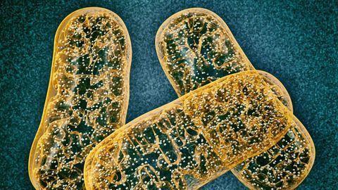 Tiny Protein Has a Big Impact on Health and Longevity