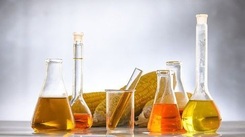 Biocatalysts for Biodiesel Production Generated With Novel Technology