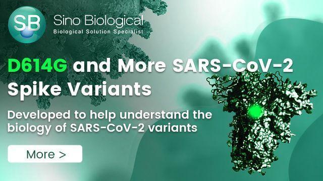 D614G : SARS-CoV-2 S1 Variant