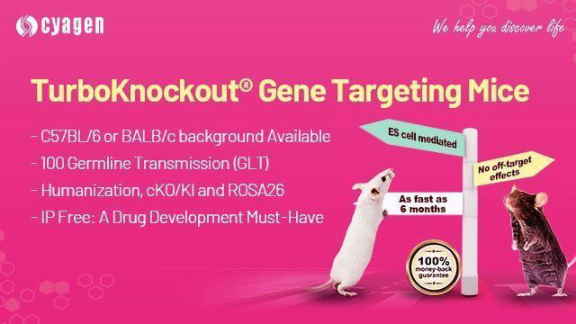 TurboKnockout® Gene Targeting Mice Services