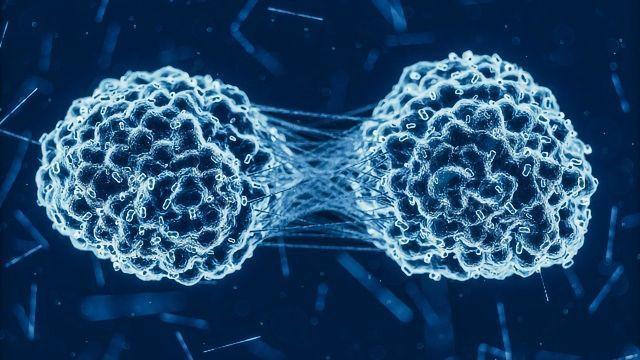 Novel Protein Drives Cancer Progression