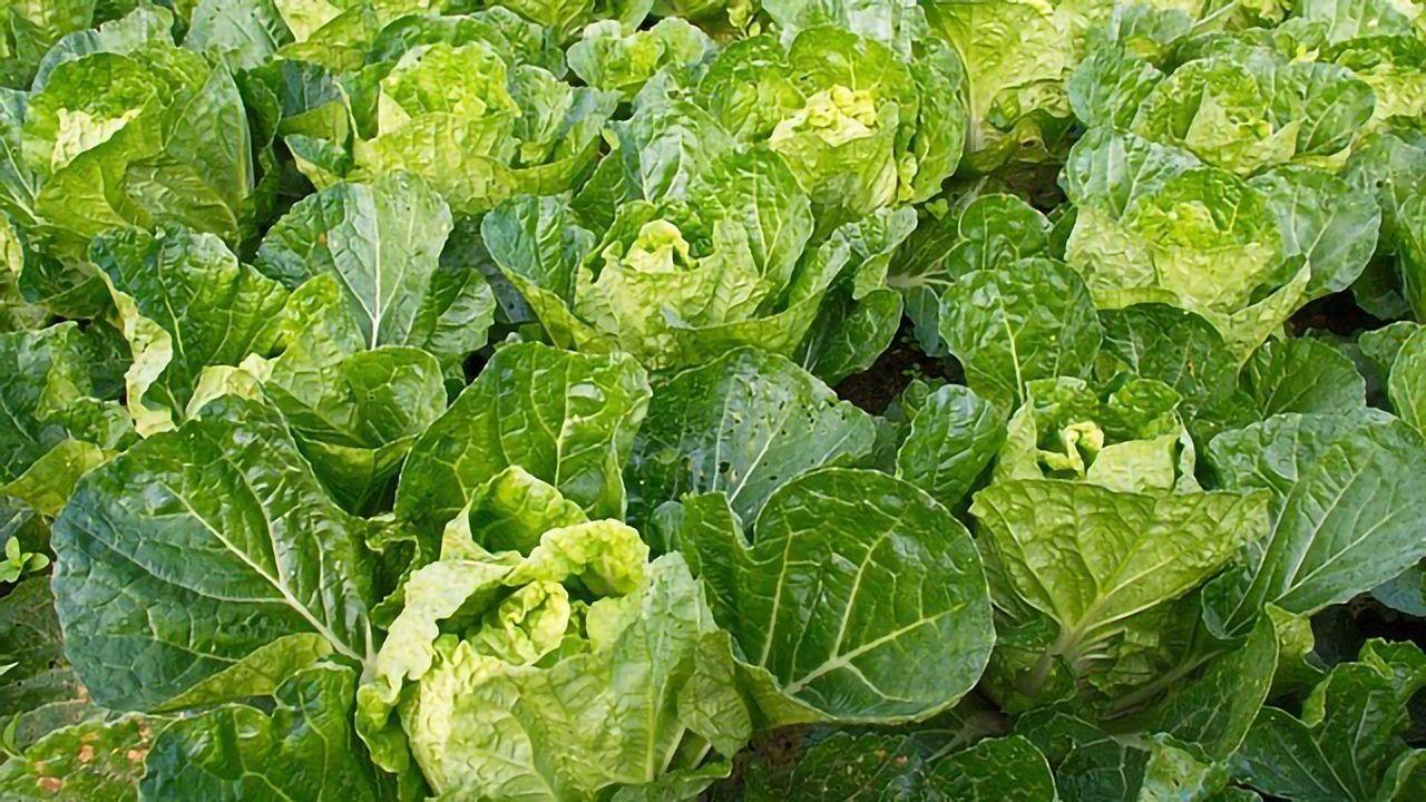 Bacteria Are Circumventing Plant Defenses To Cause Foodborne Illnesses